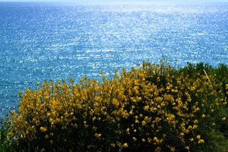 Ermones Corfu Philoxenia hotel the landscape of Ermones beach has flowers and crystal clear waters